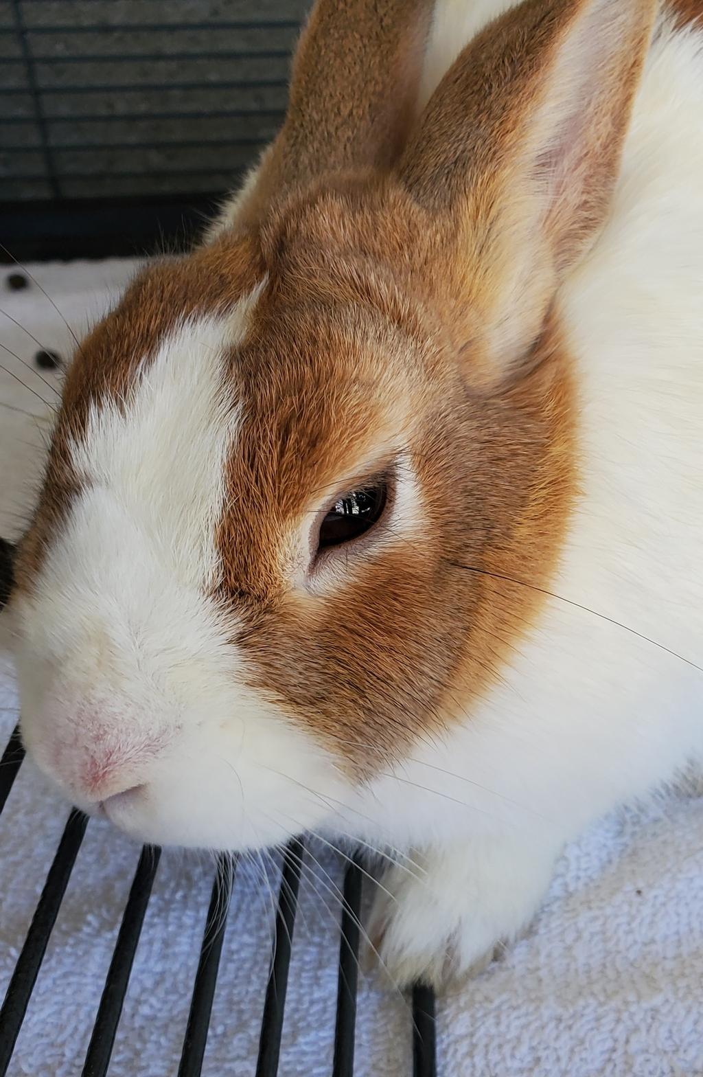 Photo of animal